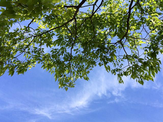 風景003(新緑)