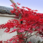 風景010(紅葉)