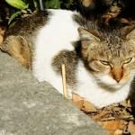 動物01(猫)