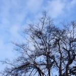 風景031(雪を被った木)