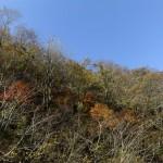 風景041(落葉の山)