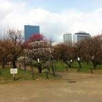 花023(大阪城公園の梅)