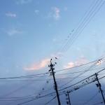 空021(電柱と空と鳥達)
