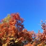 風景048(紅葉と青い空)