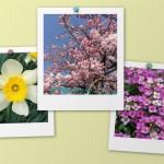 花041(春の花の写真・ポラロイド風)