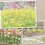 花045(春の花の風景・フォト風)