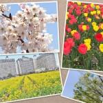 花048(春の花・フォト風)