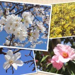 花053(春の花・フォト風)