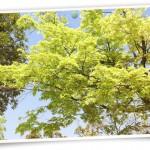 風景064(新緑・フォトカード風)