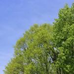 風景067(青空と新緑)