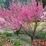 花069(桃源郷/花桃と春の花)