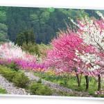 花072(花桃と春の花達・フォト風)