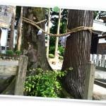 風景072(春日神社の良縁の木/フォト風)