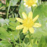 黄色い花の写真画像(P008)