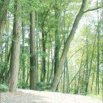 静かな佇まいの林の写真画像(P015)