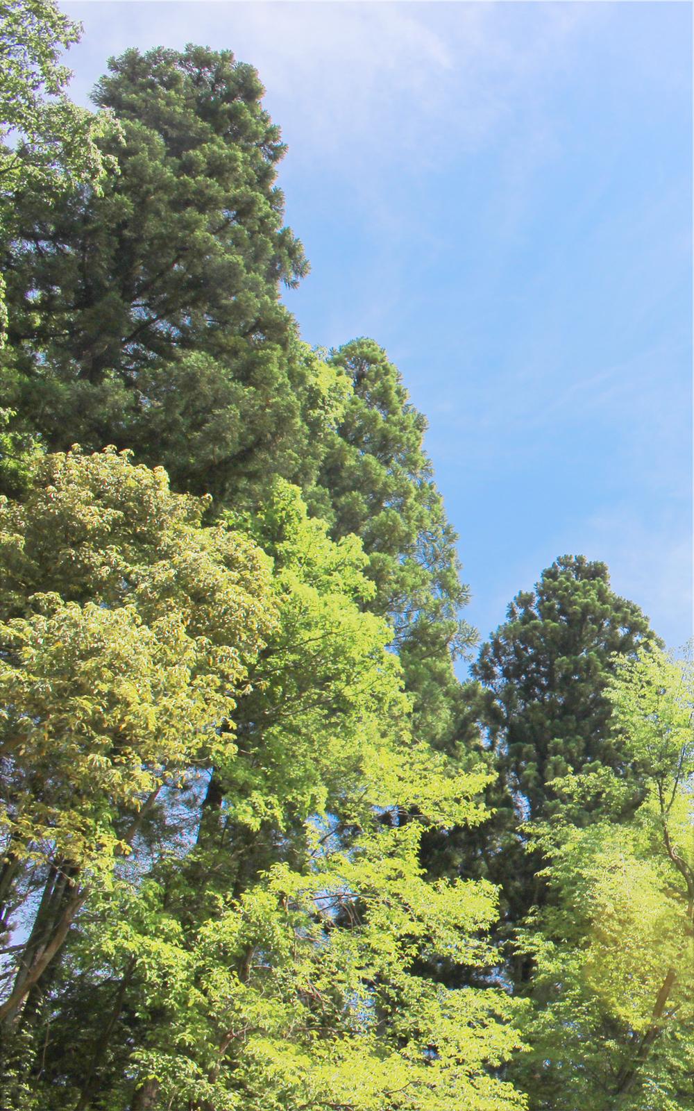 新緑の山の写真画像(P018)