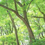 新緑の森の写真画像(P020)