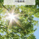 新緑と鮮烈な木漏れ日の写真画像(P021)