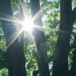新緑と強い逆光の写真画像(P022)