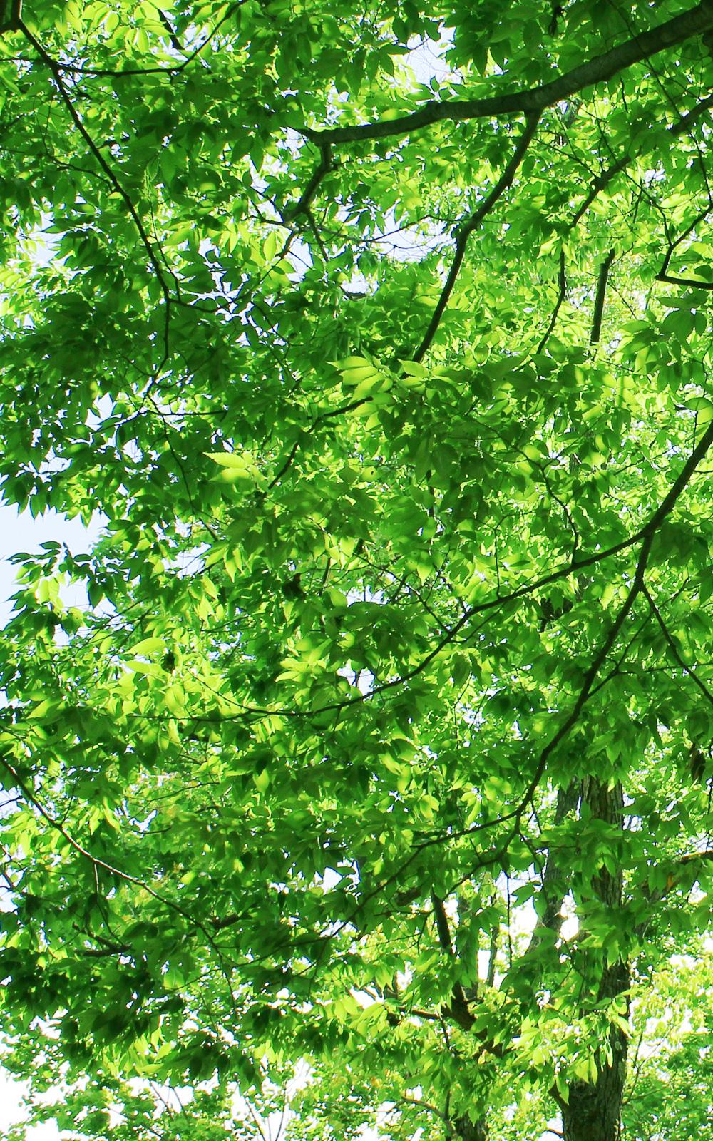 伸びやかな新緑の写真画像(P023)