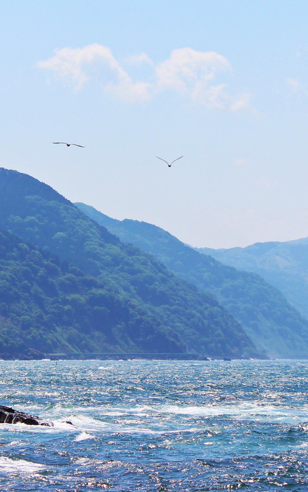 海と空を飛ぶカモメの写真画像(P026)