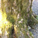 巨木の根元の写真画像1(P037)