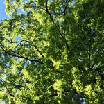 逆光に映える新緑の写真画像(P045)